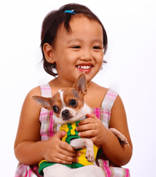 bonding-with-your-chihuahua