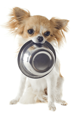 buying healthy dog food