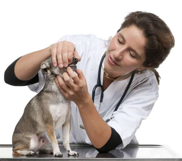 complementary-dog-medicine