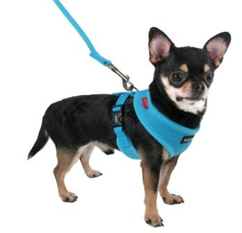 Best Dog Collars Vest For Dogs Over