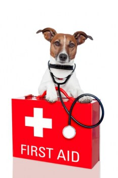 emergency-first-aid-for-dogs