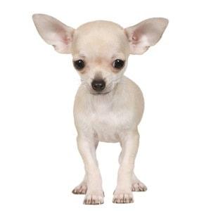 treatment-for-dog-arthritis