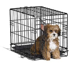 dog-crate