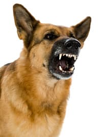 dominance-aggression-in-dogs