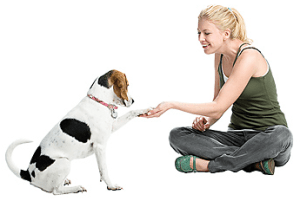 common-dog-handling-mistakes