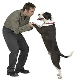 dealing-with-unwanted-dog-jumping