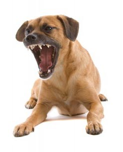 dog barks and bites strangers when we meet
