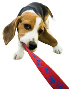 how-to-prevent-play-biting-in-dogs