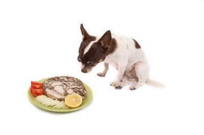 Which Diet Is Right For Your Dog