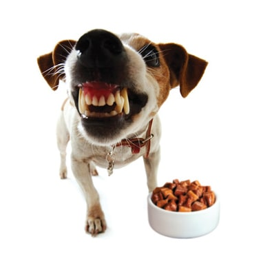 Dog Food Aggression Toward People